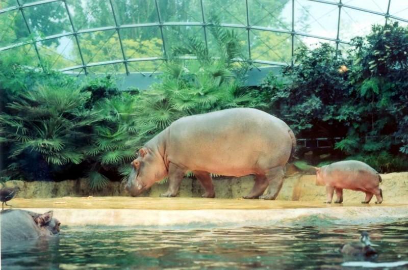 Берлинский зоопарк 11