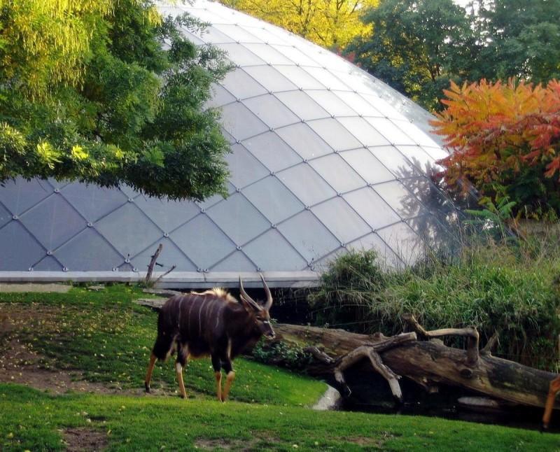 Берлинский зоопарк 13