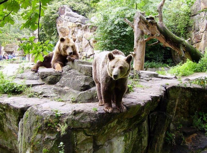 Берлинский зоопарк 14