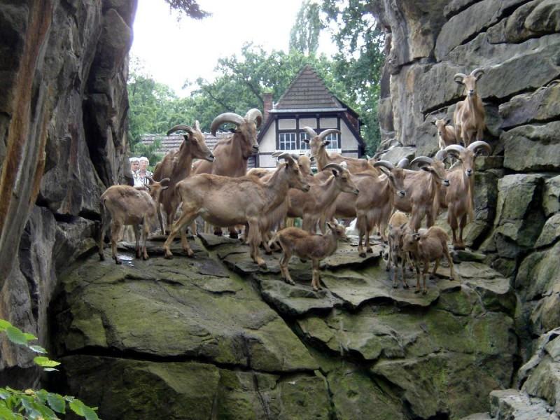 Берлинский зоопарк 7