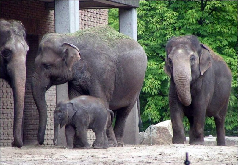 Берлинский зоопарк 8