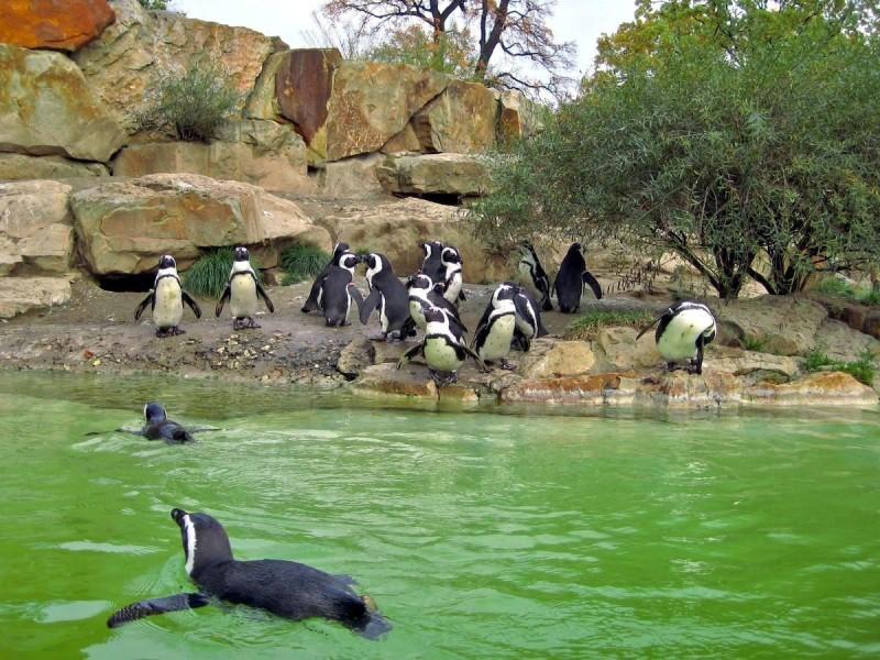 Берлинский зоопарк 9